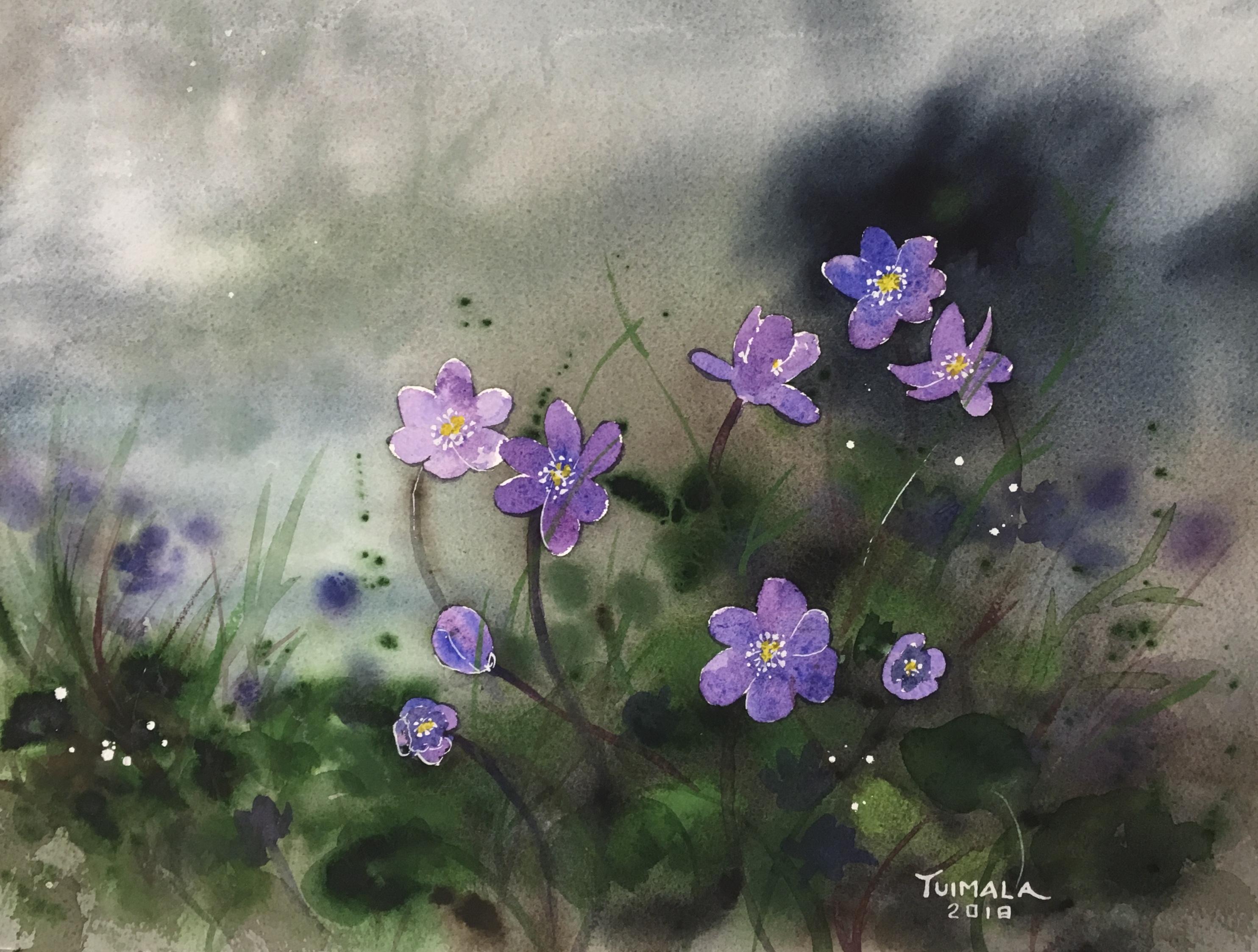 Akvarellimaalaus sinivuokoista