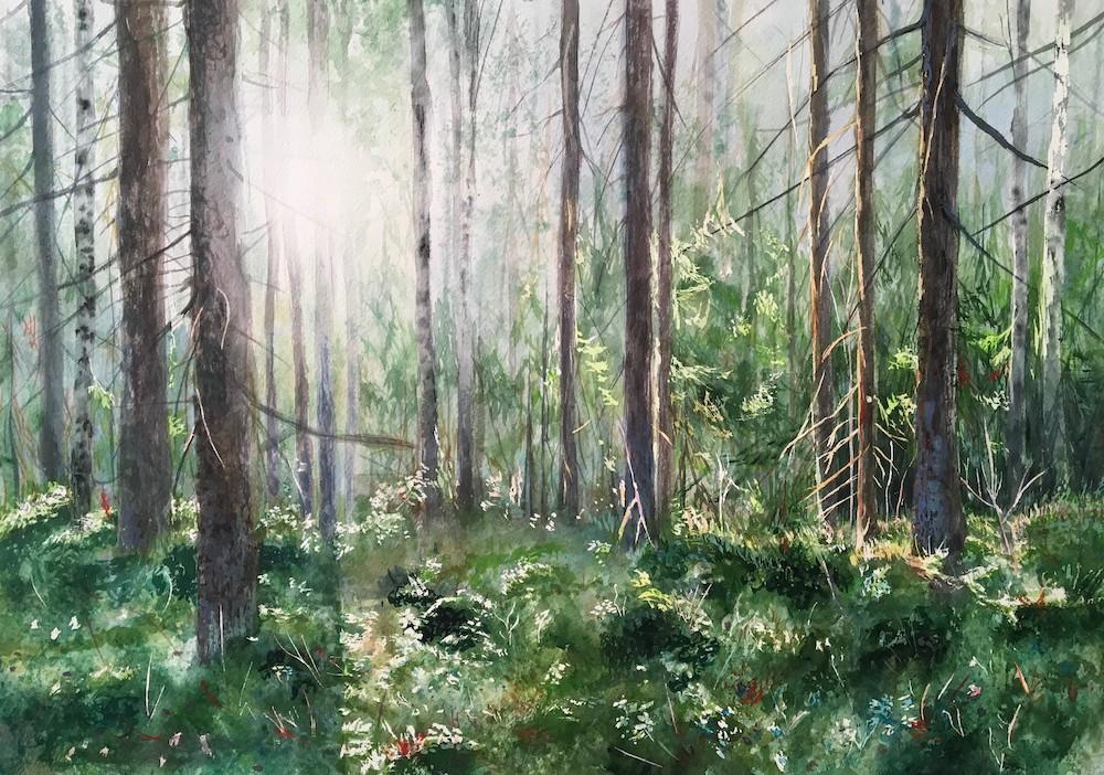 metsä akvarelli